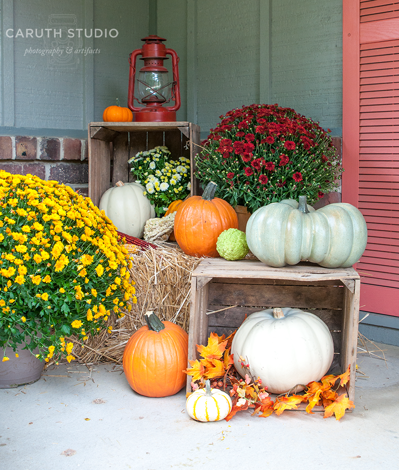 Crates and orange and white pumpkins and flowering yellow and burgandy Mums