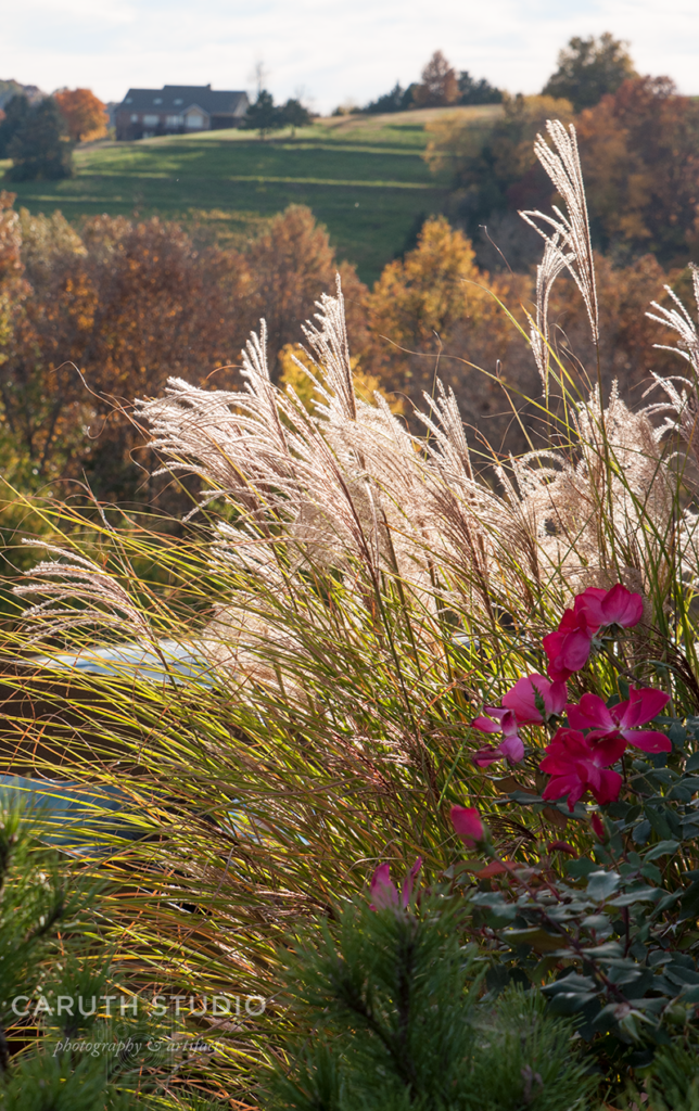 Detail of fall foliage with flowing grasses swaying in the breeze