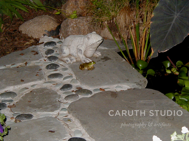 Frog friends, one larger and made of concrete, the other small and made of frog