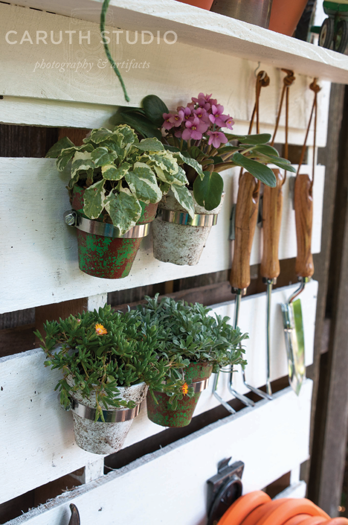 Plants hanging on pallet
