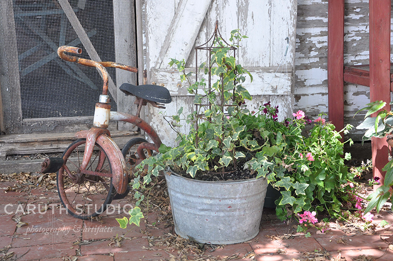 Vintage tricycle and potted plant