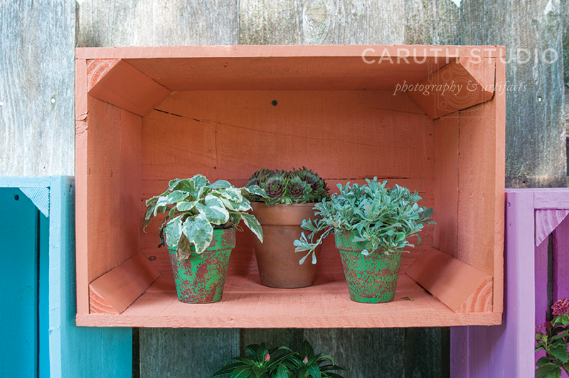 Painted pallet crate with a trio of potted plants within