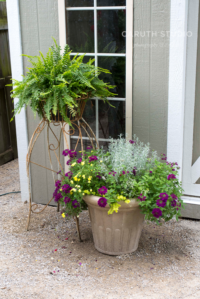 Potted plants by door