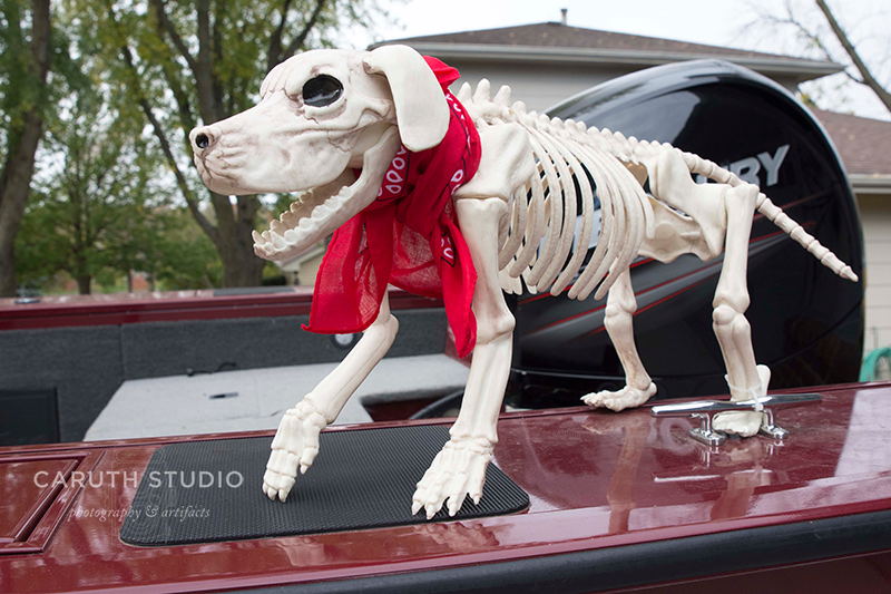 skeleton dog on the boat for a ride on the open seas - completed ensemble with matching red scarf