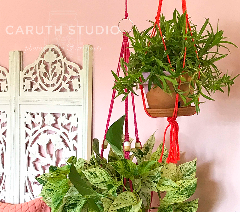 potted plants hanging from the ceiling