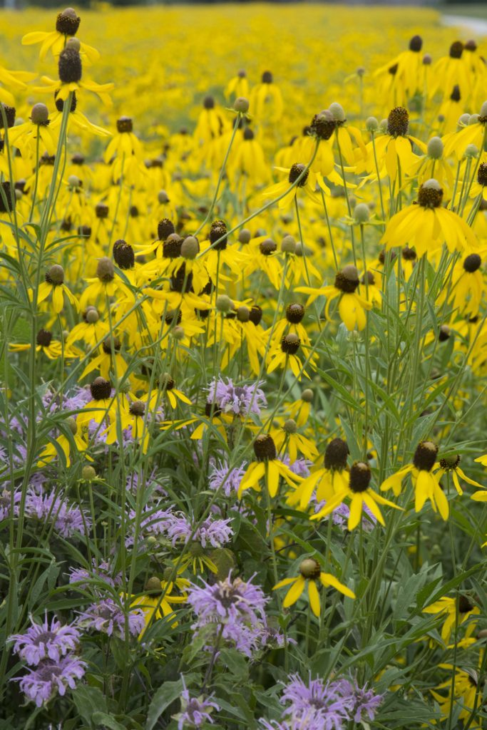 Wildflowers in yellow and purple