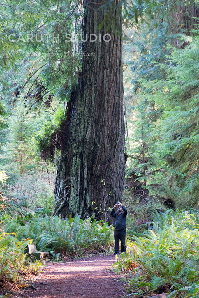 small man photographing redwood trees