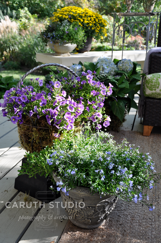 Coordinated plant colors in purple blue and green